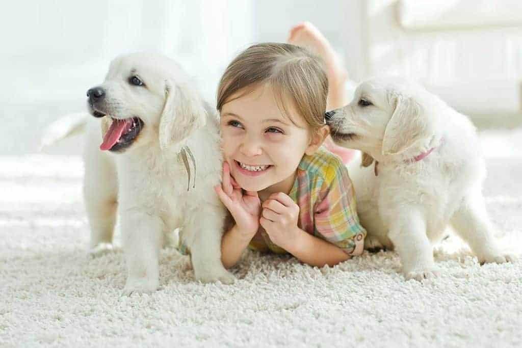 carpet-cleaning-nottingham