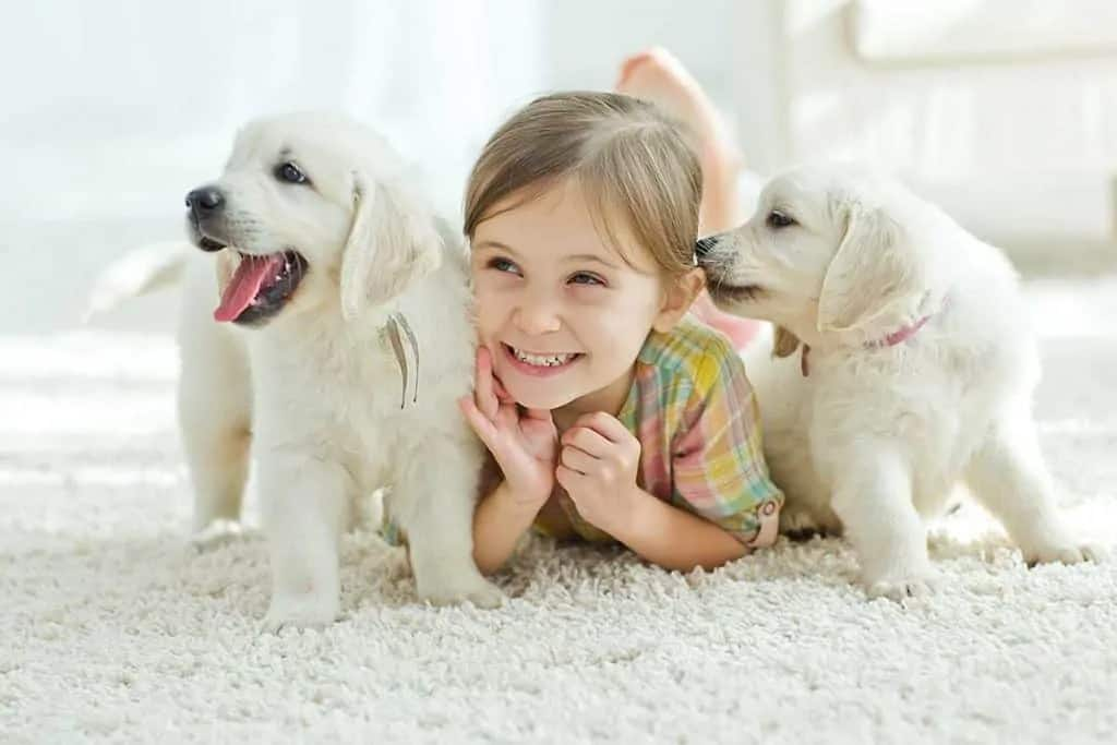 Carpet Cleaning Clifton Mobile